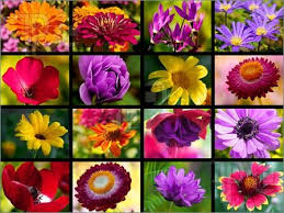 Summer Flowers For Garden - best flowers for garden in summer season
