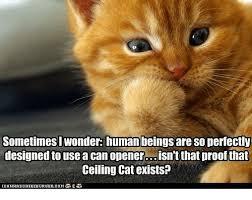 Ceiling Cat Meme - 25 best memes about ceiling cat ceiling cat memes