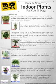 pet safe plants toxic and non toxic indoor plants for feline and