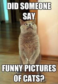 Funny Cats Meme - did someone say funny cat meme cat planet cat planet