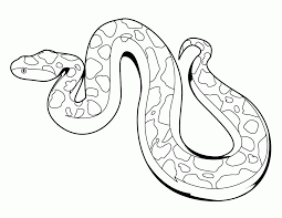 boa coloring page coloring home