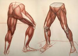 He Made Accurate Drawings Of The Human Anatomy 125 Best Anatomy For Artists Leg And Foot Images On Pinterest