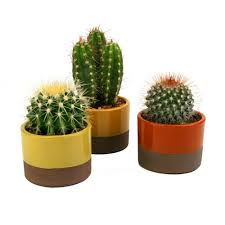 pots for succulents for sale 3 5 in assorted cactus plant in horizon deco pot 3 pack 0881009
