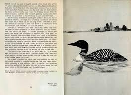 Birds In Your Backyard Museum U2013 05 Birds In Your Backyard U2013 1941 U2013 U2013 The Legacy Of