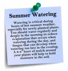 Gardening Tips For Summer - smart watering tips for summer new garden pinterest gardens