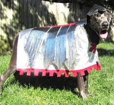 Dog Halloween Costumes 64 Halloween Pets Images Happy Halloween