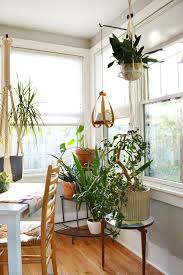 view indoor plants for home decor modern rooms colorful design