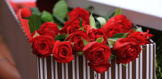 Flowers For Valentines Day Valentines Day Flowers And Gifts Lismore Chocolates Teddies