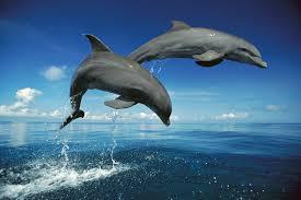 dolphins have longest memories in animal kingdom