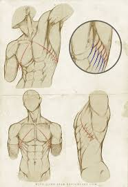 Human Anatomy Male 63 Best Figure Male Images On Pinterest Anatomy Reference