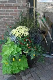 biochar and rock dust home garden field trials preparation in the