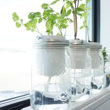 diy self watering herb garden diy self watering herb planter free basil for life blank