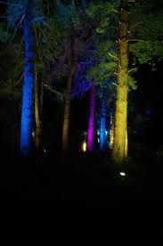 some of the beautifully lit up trees picture of mount stewart