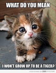 Cute Kitten Memes - kitten got the bad news cute kitten making disappointed face