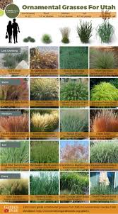 ornamental grasses for utah
