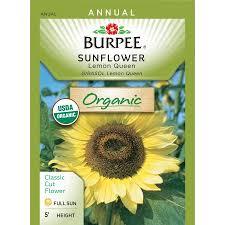 sunflower seed packets burpee sunflower lemon organic seed packet walmart