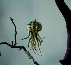 gourd jellyfish air plant octopus hanging terrarium by mysnoozles