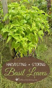 Herb Garden Winter - 637 best vegetable u0026 herb gardening images on pinterest gardens