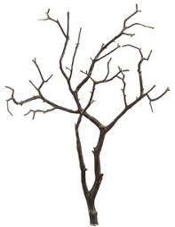 curly willow branches 10 dried wedding wishing tree blessing tree