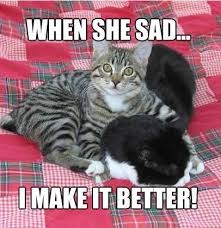 Feel Better Meme - 9 magnificent meme monday cat memes petcentric by purina