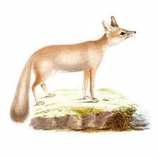 Woodland Animal Nursery Decor by Woodland Animals Nursery Decor Fox Wall Art Print Printable