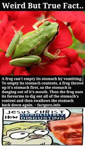 Fact Frog Meme - gay frogs memes best collection of funny gay frogs pictures
