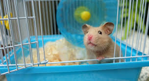 How Much Is A Hamster Cage Best Hamster Cage Top Choices For Syrian And Dwarf Hamsters