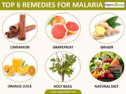 10 efficient natural remedies for malaria organic facts