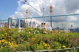 Flower Area - pier 6 brooklyn bridge park