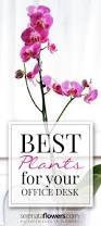 fantastic best desk plants 12 for the office bloomberg