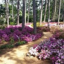 Raleigh Botanical Garden Wral Azalea Gardens 37 Photos Botanical Gardens 2619 Western