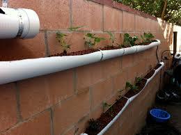backyard aquaponics endless sustainability