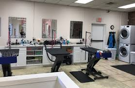 the dog spaw of freehold salon u0026 mobile dog grooming the dog