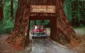 Chandelier Tree California Chandelier Drive Thru Tree Underwood Park California Flickr