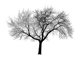 amazing tree silhouette wallpaper 2048x1536 28944