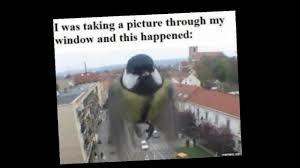 Funny Bird Memes - funny bird memes youtube
