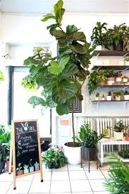 best indoor plants for low light large indoor plant low light best indoor flowering plants for office