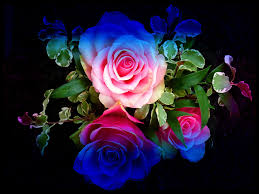 colorful roses glitter roses backgrounds wallpaper colourful roses roses