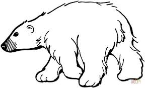 free simple polar bear coloring pages children af8vj