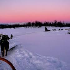 5b dog sledding hurtigruten