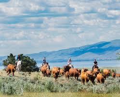 hidden hollow hideaway cattle u0026 guest ranch
