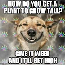 Stoned Dog Meme - stoner dog meme imgflip