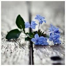 imagenes con flores azules dia de la maestra 231 mejores imágenes de 3 blue green en pinterest azul verde