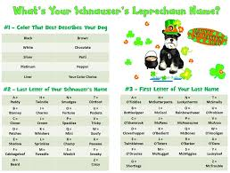 what s your schnauzer s leprechaun name use our name generator to
