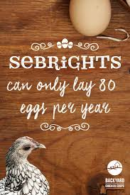 21 best sebright chickens images on pinterest chicken backyards