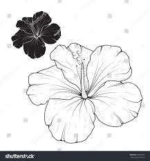 hibiscus mallow flower isolated top view stock vector 443289352