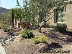 Desert Backyard Landscaping Ideas Image Result For High Desert Landscaping Desert Landscaping