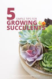 Succulents That Don T Need Light 5 Succulent Care Tips Prevent Succulent Leaves Falling Off