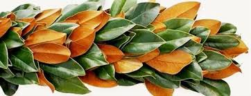 magnolia leaf garland magnolia garland price per foot florasource