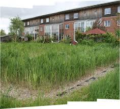 native wetland plants constructed wetland wikipedia
